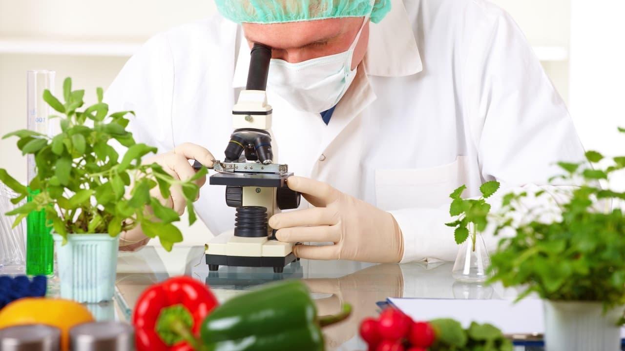 food technology food product development