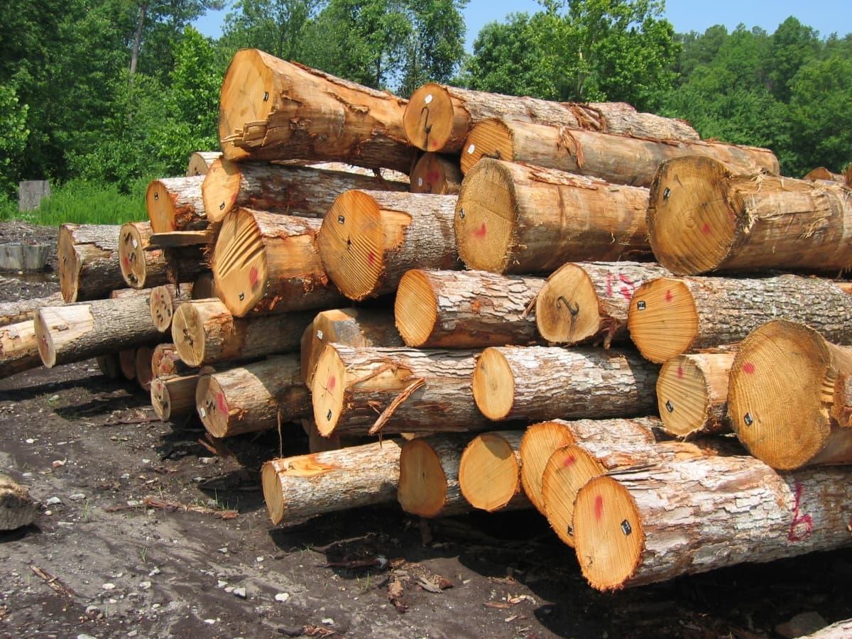лес для строительства